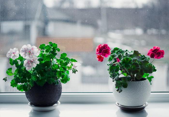 Цветение обеспечено круглый год! Комнатные цветы растут даже зимой!
