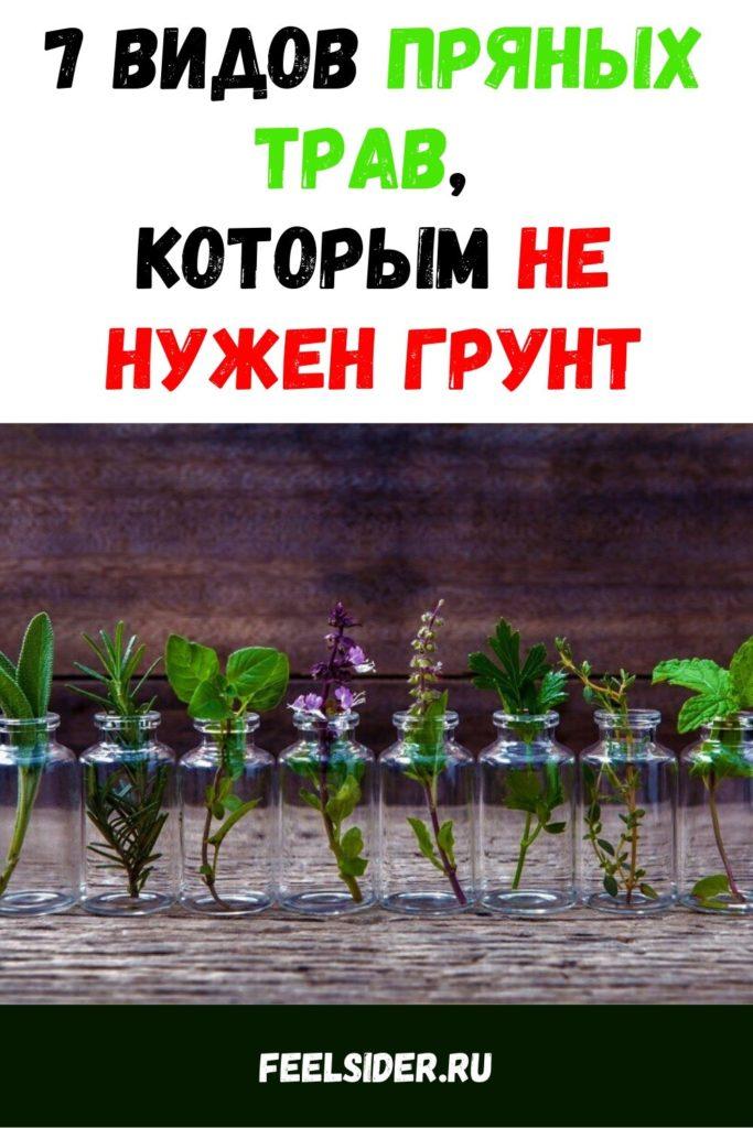 7 видов пряных трав, которым не нужен грунт