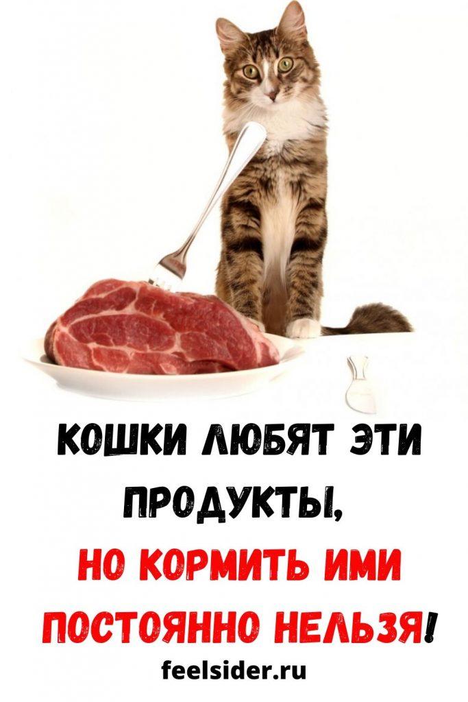 Кошки любят ЭТИ продукты, но кормить ими постоянно нельзя!