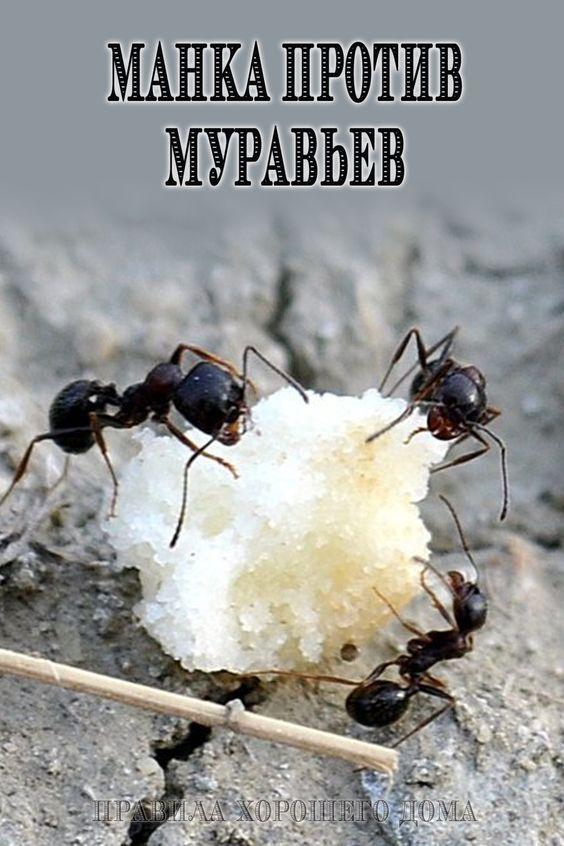 Манка против муравьев