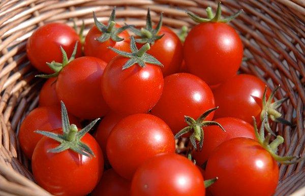 Как получить отличный урожай помидоров, которому позавидуют все соседи?