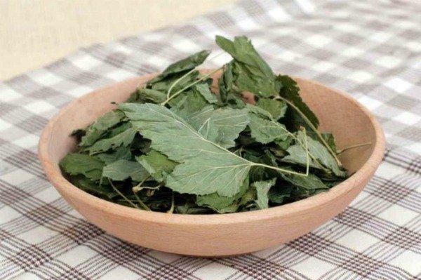 Зачем я каждый год сушу листья смородины? Да потому что они лечат кучу болезней