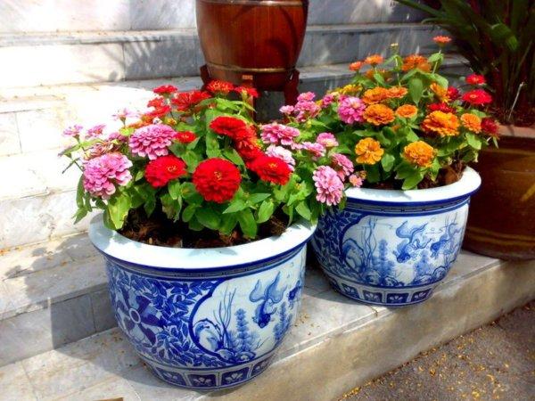 15 фантастически красивых цветов для летнего контейнерного сада
