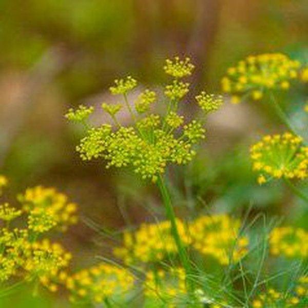 Растения, которые всегда должны расти рядом