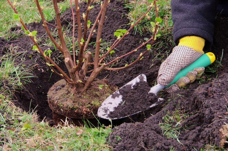 Что после чего сажать: памятка садовода