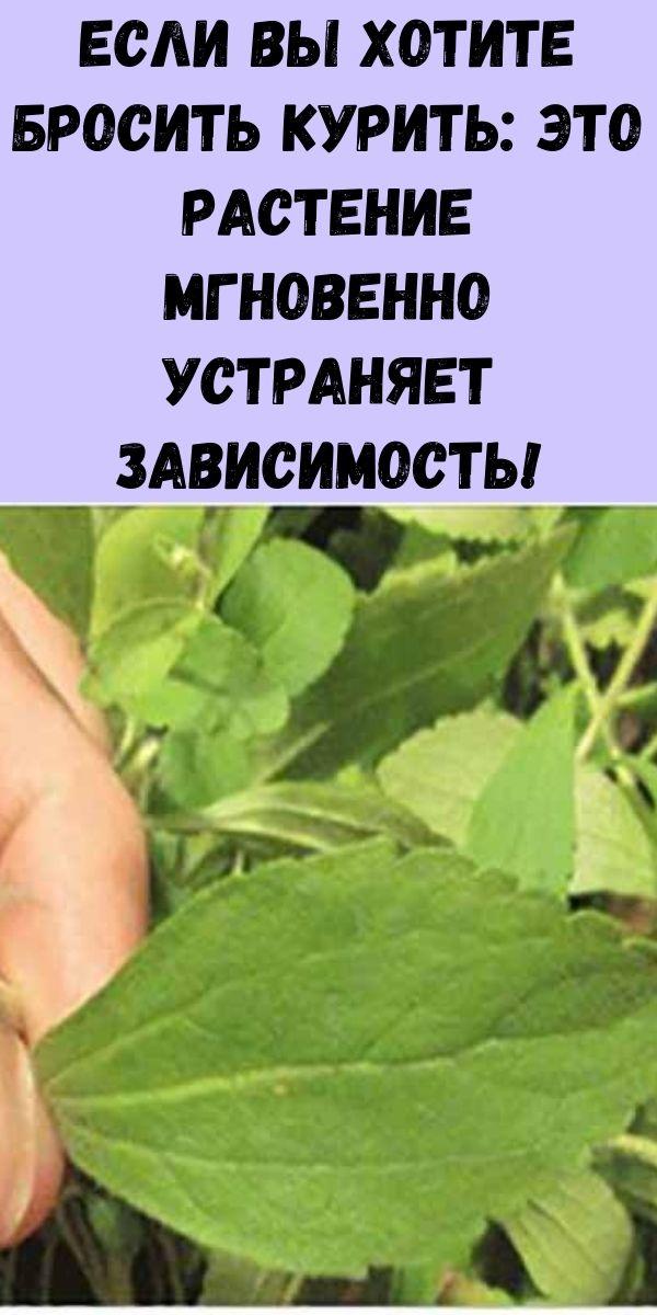 Если вы хотите бросить курить: это растение мгновенно устраняет зависимость!