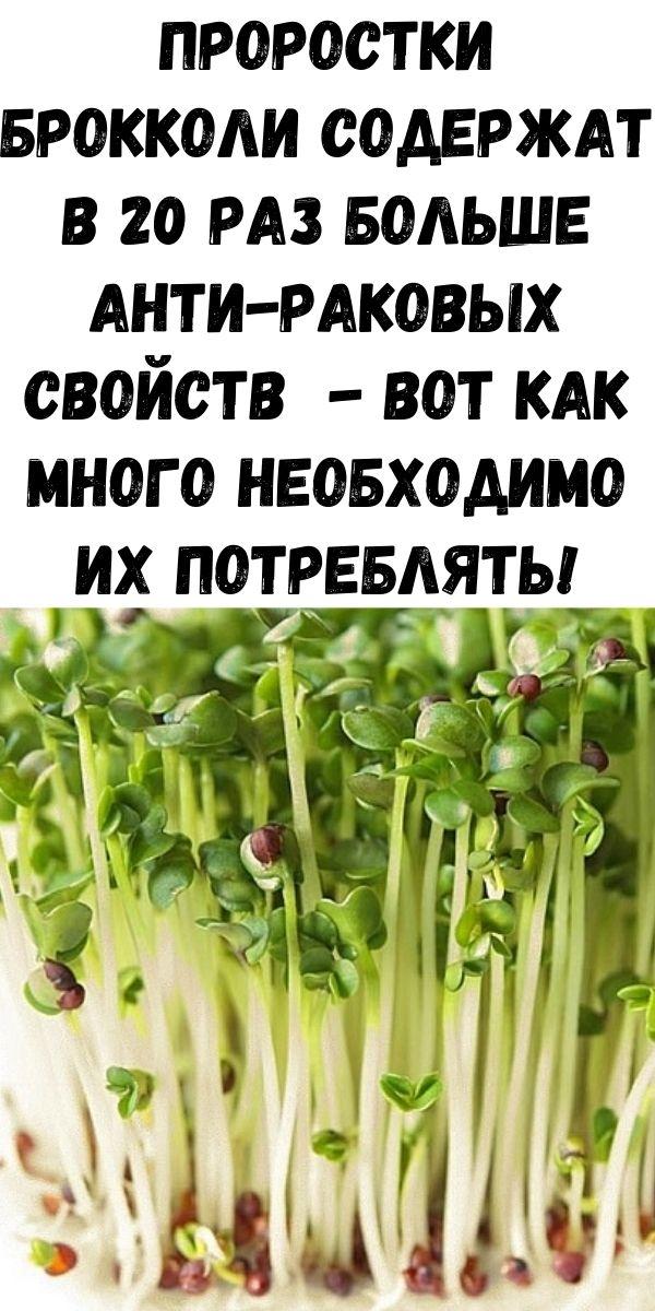 Проростки брокколи содержат в 20 раз больше анти-раковых свойств - вот как много необходимо их потреблять!