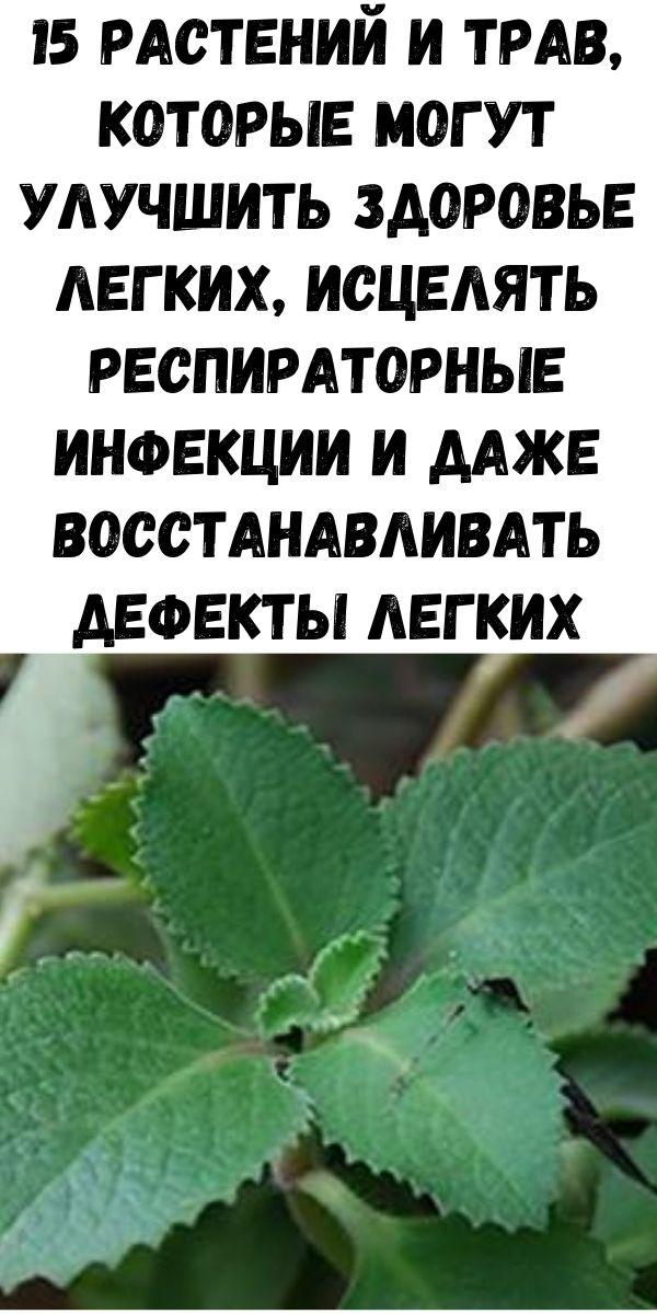 15 растений и трав, которые могут улучшить здоровье легких, исцелять респираторные инфекции и даже восстанавливать дефекты легких