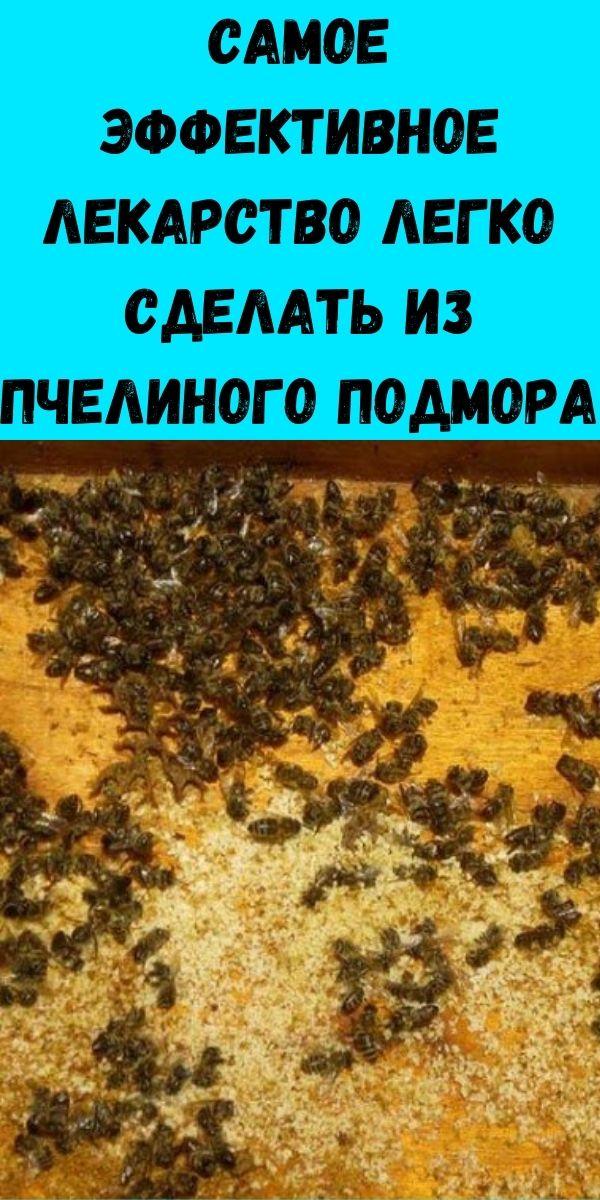 Самое эффективное лекарство легко сделать из пчелиного подмора