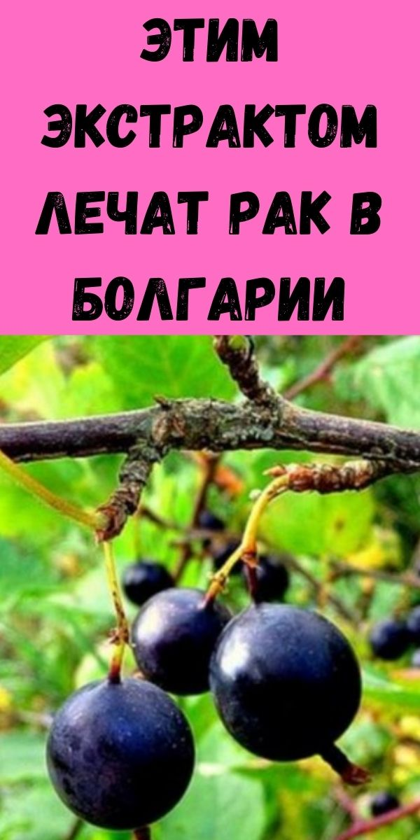Этим экстрактом лечат рак в Болгарии