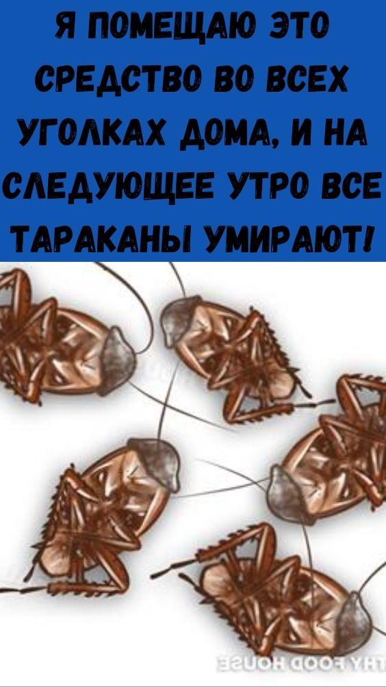 Я помещаю это средство во всех уголках дома, и на следующее утро все тараканы умирают!