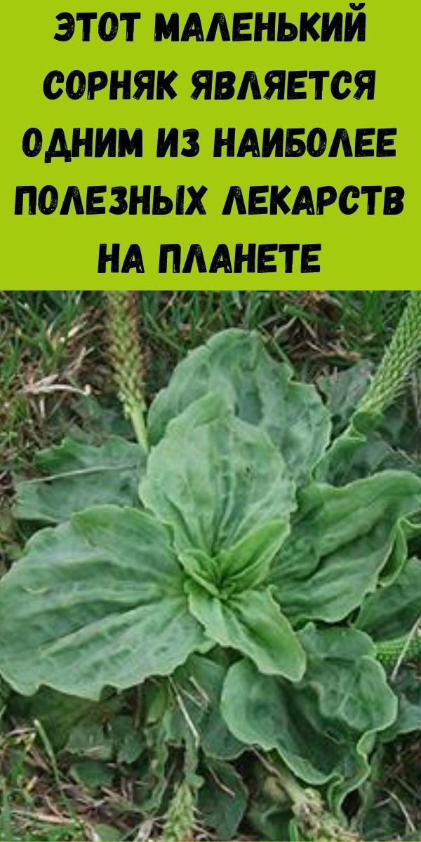 Этот маленький сорняк является одним из наиболее полезных лекарств на планете