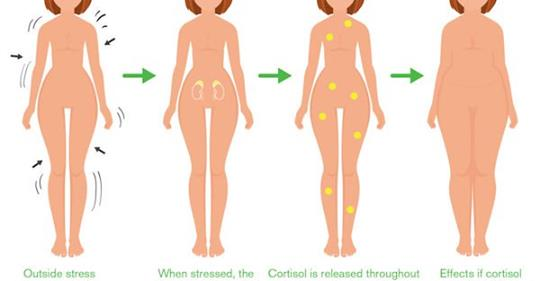 Как естественным способом уменьшить уровень кортизола в организме